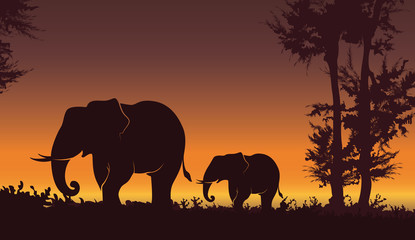 Beautiful sunset with Elephant. Baby elephant with mom, nature background - Vector illustration