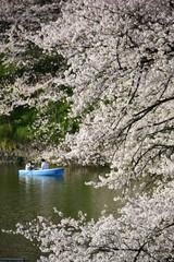 さくら・サクラ・桜