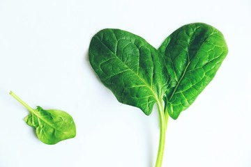 Spinach leaves isolate on white background top view