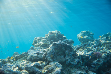 Sea, coral and fish. coral under water