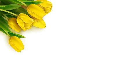 Bunch of spring yellow tulips on white background. Vector illustration