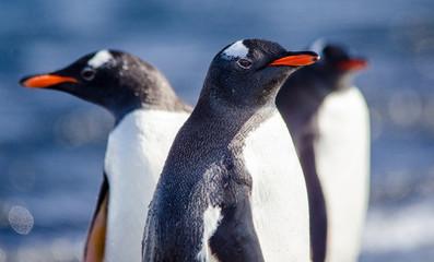 Antartica ou Antartida