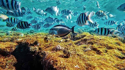 fish underwater world