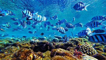 fish swim in the red sea