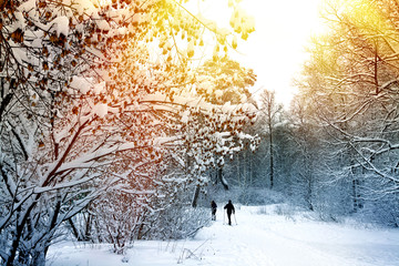 Winter forest landscape with skiing people