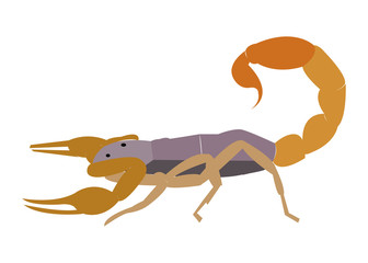 Simple flat cartoon vector scorpion illustration