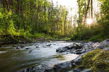 Printed kitchen splashbacks Forest river Gales Creek