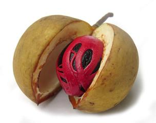 Nutmeg and its mace