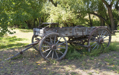 Old Faded Wooden Wagon Against Green Cottonwood Trees