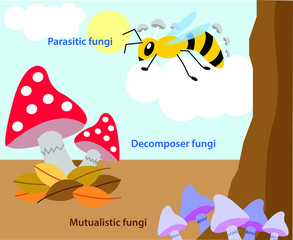 Vector illustration of different types of fungi. Colourful fungus biology picture.