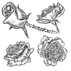 Tattoo concept rose flowers set. Tattooing idea collection style ink roses elements. Wild flowers mix for design. Vector.