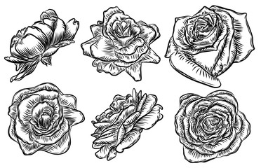 Roses set. Vintage flower collection. Wild flowers mix for design. Vector.