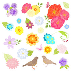 collection of meadow flowers and birds for your design