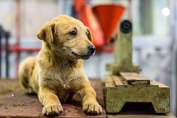 portrait of a sad stray dog