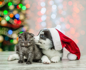 Husky puppy in red santa hat licking kitten on a background of the Christmas tree