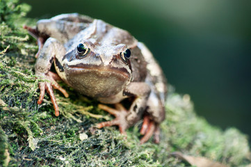 Frog on a stone