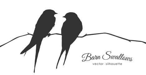 Isolated Silhouette of two Barn Swallows sitting on a dry branch on white background. Fotomurales