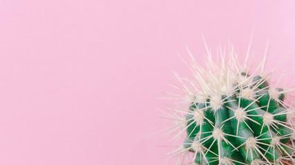 Photo sur Aluminium Cactus Cactus close up on the pink background