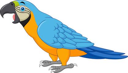 Cartoon blue macaw isolated on white background