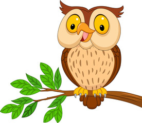 Cartoon owl isolated on white background