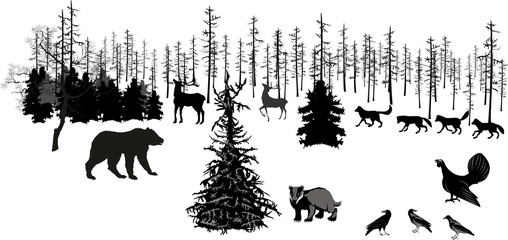 Monochrome vector illustration of winter northern forest, trees, animals, bear, deers, wolves, badger.
