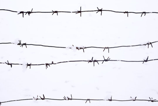 Barbed wire against the background of snow