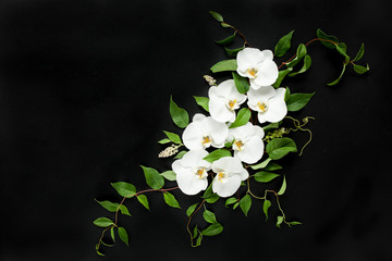 Composition of white orchids and green leaves on a black background. Flat lay, top view. Frame of flowers. Floral pattern.