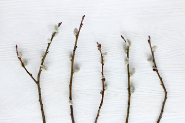 spring Easter preparations/ five willow twigs on light wood surface top view