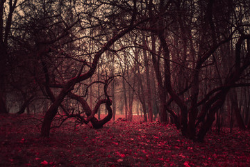 Wallpaper dark mysterious forest in a fog. Stranger winding branches of trees in the mist. Background mystic atmosphere