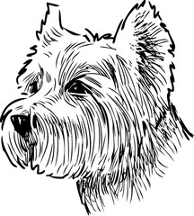 sketch portrait of a scottish terrier
