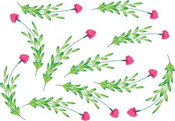 carnation flower background