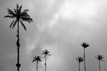 Palm trees silhouettes over cloudy sky