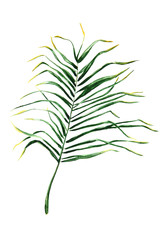 """The illustration """"Hand drawn palm leaves on white background for your design."""