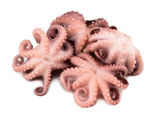 Small octopus isolated on white background. Close up