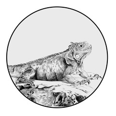 iguana sitting on a rock, sketch vector graphics a monochrome graphic in a circle