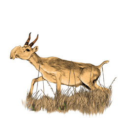 antelope running through the dry grass sketch vector graphics color picture