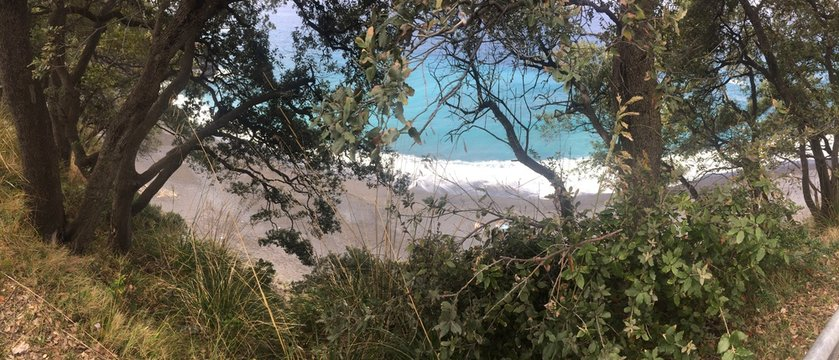 Vista mare tra gli alberi