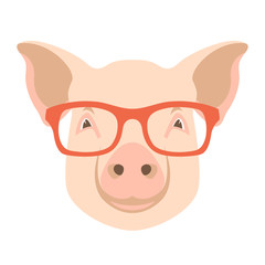 pig  face vector illustration flat style  front