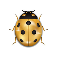 Ladybug gold insect small icon. Golden metal lady bug animal sign, isolated on white background. 3d volume bright design. Cute shiny jewelry ladybird. Lady bird closeup beetle.. Vector illustration