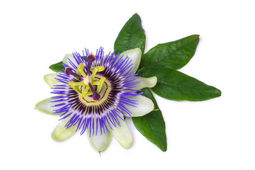 Passiflora passionflower isolated on white background. Big beautiful flower