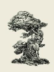 Лиственный бонсай.Deciduous bonsai.