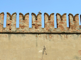 Brick wall in Venice with seagull
