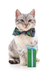 Cat with a gift.