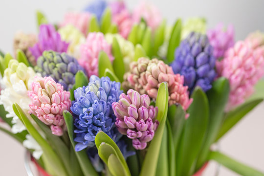 hyacinth closeup. Flower shop concept. Mixed color. Fresh spring flowers in refrigerator room for flowers. Bouquets on shelf, florist business.