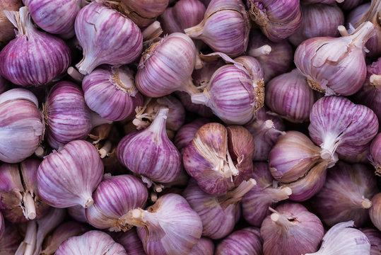 Close up purple garlic