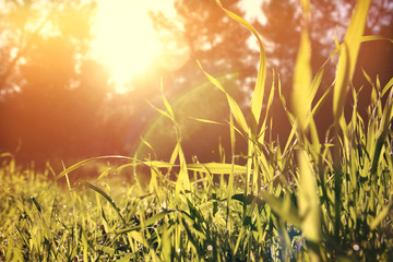 low angle view of fresh grass. freedom and renewal concept. Vintage filtered image.