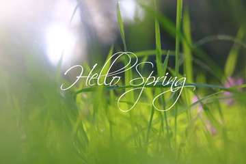 low angle view image of fresh grass. freedom and renewal concept with spring text.