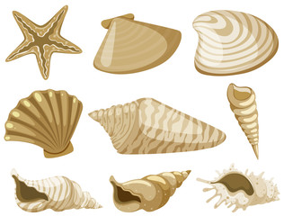 Different types of seashells in brown color