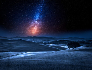 Fototapete - Milky way and tree on field in summer at night