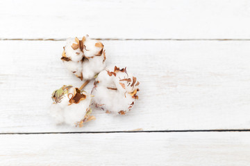 Cotton flower on white wooden background. Flat lay